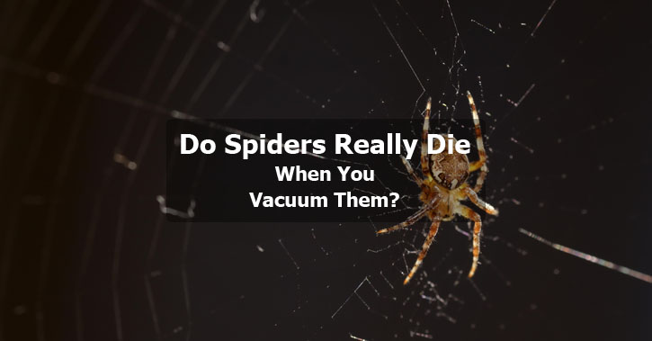 Do Spiders Really Die When You Vacuum Them?