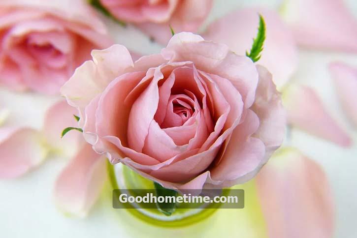 38.2. rose-3086563_960_720