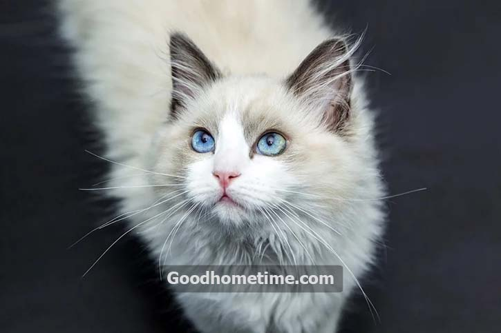 130.2. cats-1040954_960_720