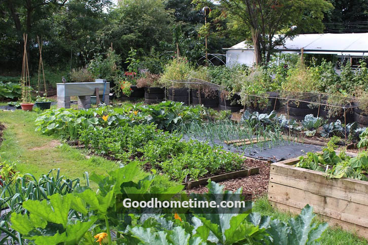 For the sake of proper growth of your vegetables and the overall health of your garden soil, getting rid of weeds is significant to make the concept of easy gardening a possible event.