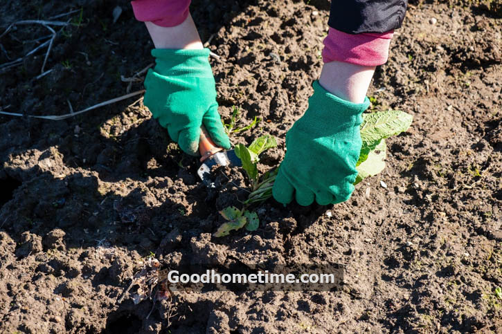 Using a lightweight standing plant root remover tool is suggested to remove garden weeds without losing your comfort efficiently.