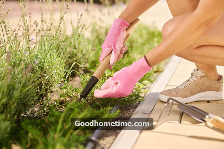 8 Ingenious Tips On How To Remove Weeds From Your Garden/Backyard?