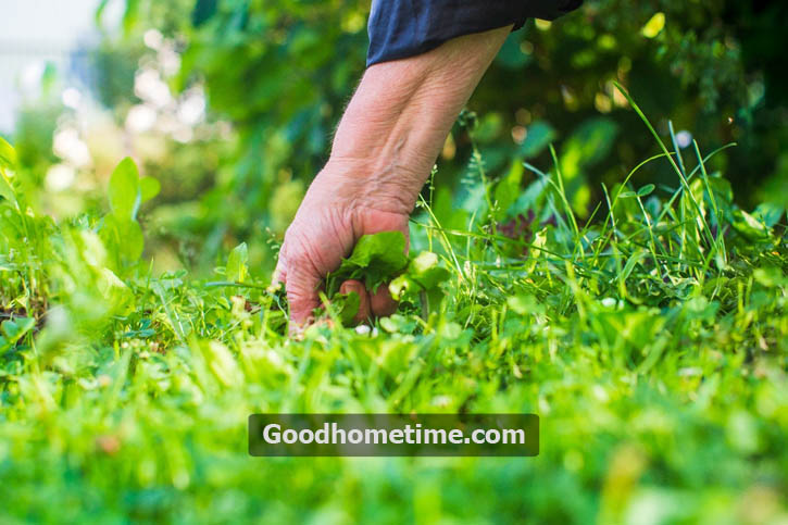 you need to be extra careful while using cornmeal as it has the ability to prevent plenty of types of seeds from germinating that are actually important for sprucing a garden up.