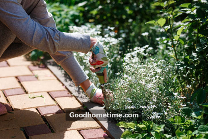When dealing with established perennial beds, it is recommended to use at least 4 layers of newspapers around plants followed by a thick mulch layer.
