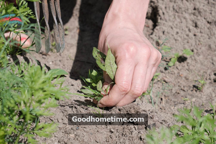 Mulch provides tons of benefits to plants by keeping soil cool along with depriving weeds of light.