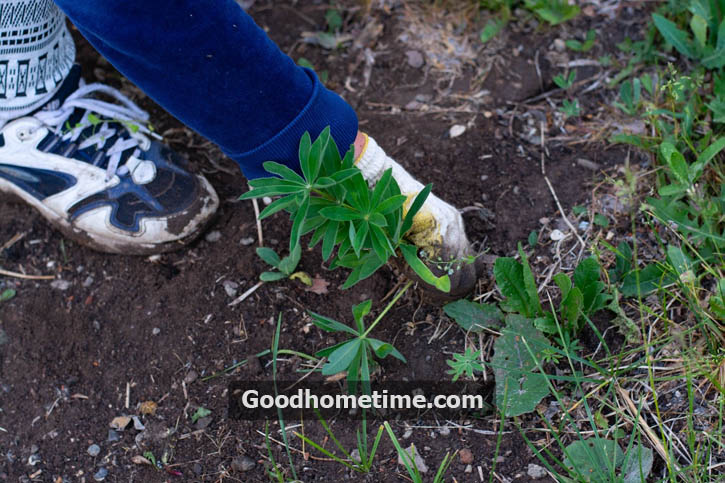 Nobody wants to see weeds growing in the garden, and everyone desires to get rid of them as quickly as possible.