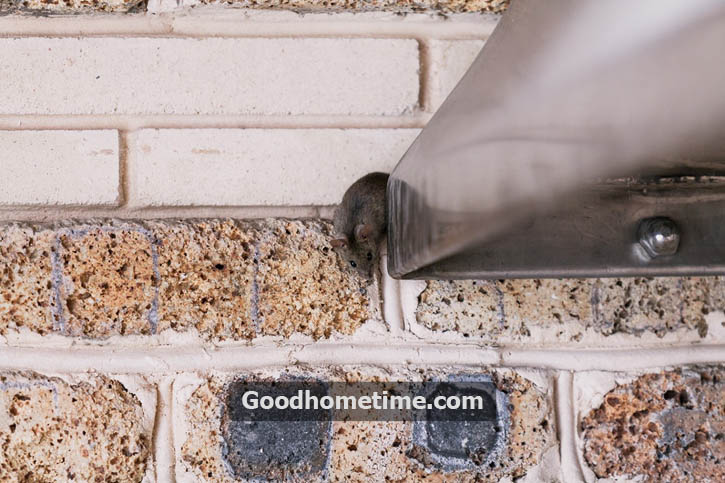 Not only do these leave harmful bacteria but rodents even make nests and leave droppings behind which causes the tiny fecal spores to sweep along the ducts.